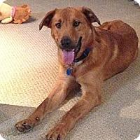 Adopt A Pet :: Sparkey - Hamilton, ON