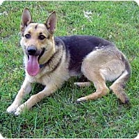 Adopt A Pet :: Trinka - Pike Road, AL