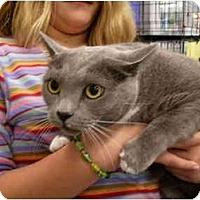 Adopt A Pet :: Logan - Jacksonville, FL