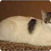 Adopt A Pet :: Daphne - Portland, OR