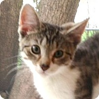 Adopt A Pet :: Vega & Nico - 2013 - Hamilton, NJ