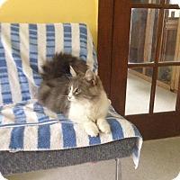 Adopt A Pet :: Verna Kelly - Lancaster, MA