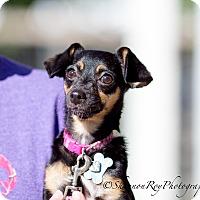 Adopt A Pet :: Maggie - Vacaville, CA