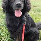 Adopt A Pet :: Berkley