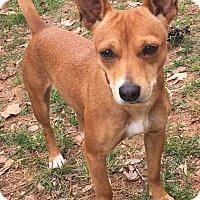 Adopt A Pet :: Princess - Monroe, NC