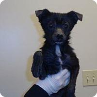 Adopt A Pet :: Bonnie - Wildomar, CA