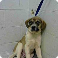 Adopt A Pet :: GUNTHER - Atlanta, GA
