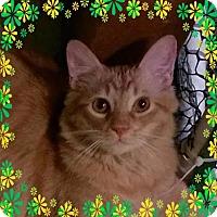 Adopt A Pet :: LB Wallace - Valley Park, MO