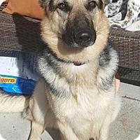 Adopt A Pet :: Abel - Seattle, WA