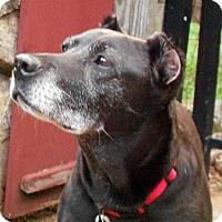 Adopt A Pet :: Lady - Harrisville, RI
