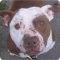 Adopt A Pet :: Danny - Bakersfield, CA