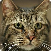 Adopt A Pet :: Marley - Canoga Park, CA