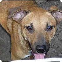 Adopt A Pet :: Bo - Pointblank, TX