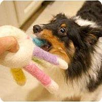 Adopt A Pet :: Riley - Sterling, VA