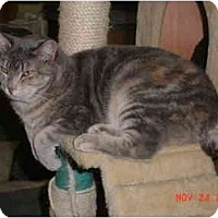Adopt A Pet :: Maya - Pendleton, OR