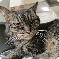 Adopt A Pet :: Strudel - Gilbert, AZ