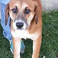 Adopt A Pet :: taylor - Prestonsburg, KY