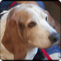 Adopt A Pet :: Pudge - Barrington, IL