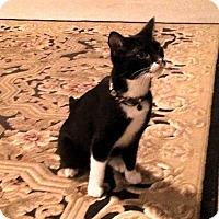 Adopt A Pet :: Oreo - Denton, TX