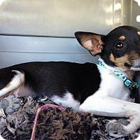 Adopt A Pet :: Cairo - Meridian, ID