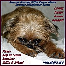 Adopt A Pet :: FOSTER HOMES NEEDED!