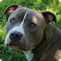 Adopt A Pet :: Sky - cupertino, CA