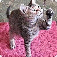 Adopt A Pet :: Cloris - Gonzales, TX