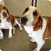 Adopt A Pet :: Taz & Sadi - Winter Haven, FL