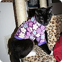 Adopt A Pet :: Dinah - Santa Rosa, CA