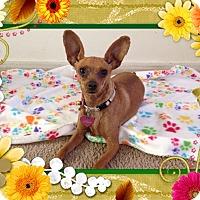 Adopt A Pet :: Cherry - Oceanside, CA
