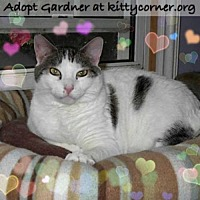 Domestic Shorthair Cat for adoption in Liverpool, New York - Gardner