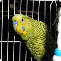 Adopt A Pet :: Bob and Lily - Neenah, WI