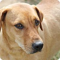 Adopt A Pet :: Lydia - Marion, NC
