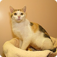 Adopt A Pet :: Lizzy - Milford, MA