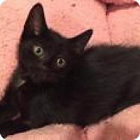 Adopt A Pet :: Lincoln - East Hanover, NJ