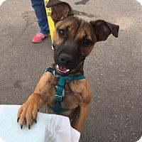 Adopt A Pet :: Chloe - Newtown, CT