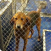 Adopt A Pet :: Essex - New Kent, VA