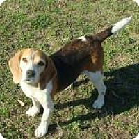 Adopt A Pet :: Polly - Birmingham, AL