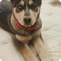 Adopt A Pet :: Valentina - Apple valley, CA