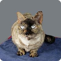 Adopt A Pet :: Sachi - Columbia, IL