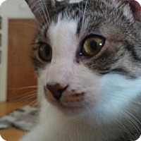 Adopt A Pet :: Jasper 3 - Bulverde, TX
