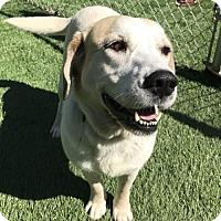Adopt A Pet :: Fredrica - Raytown, MO