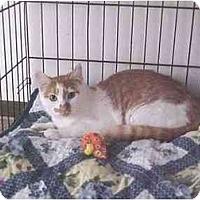 Adopt A Pet :: Sammy - Quincy, MA