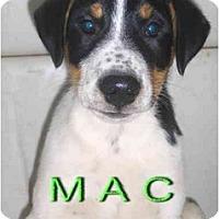 Adopt A Pet :: Mac - Toronto/Etobicoke/GTA, ON