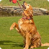 Adopt A Pet :: Murray - Denver, CO