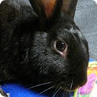 Adopt A Pet :: Keenan - Newport, DE
