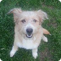 Adopt A Pet :: Rosco - Bedminster, NJ