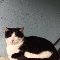 Adopt A Pet :: Elsie - Brainardsville, NY