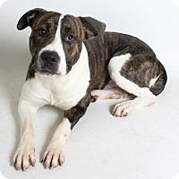 Adopt A Pet :: Dre - Redding, CA