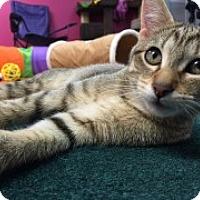 Adopt A Pet :: Schona - McHenry, IL
